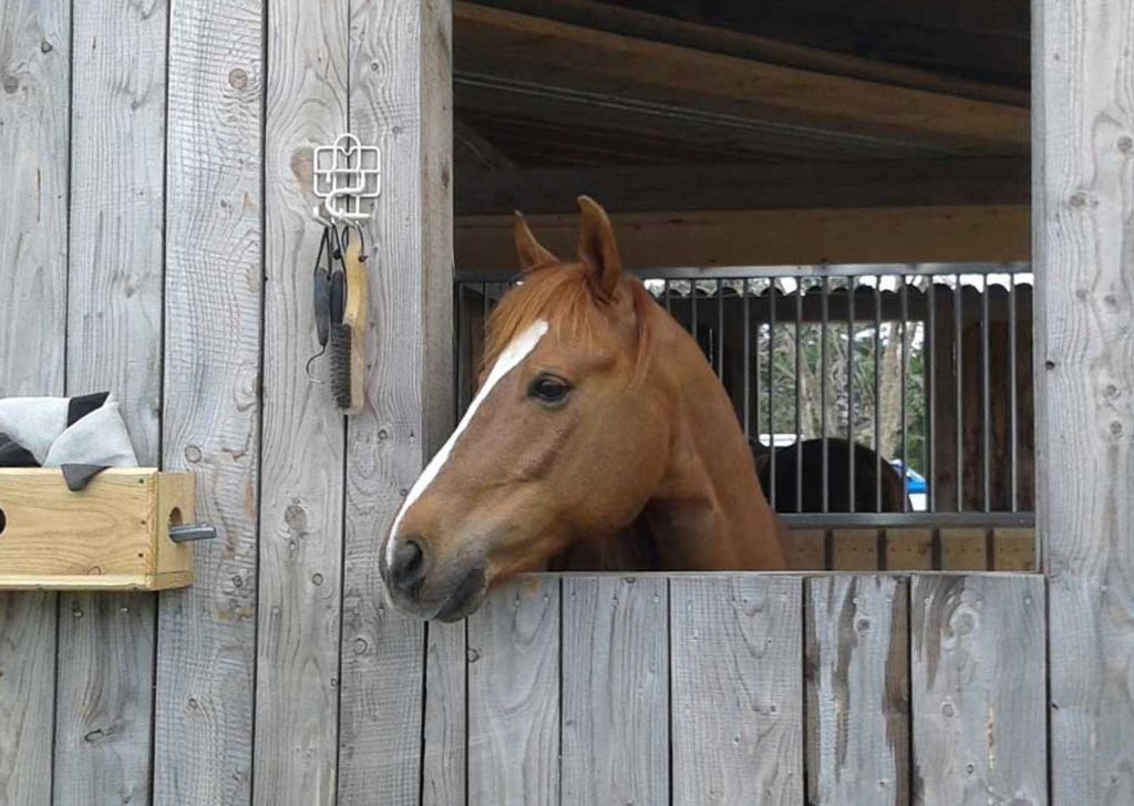 chestnut horse head over a wood barn door