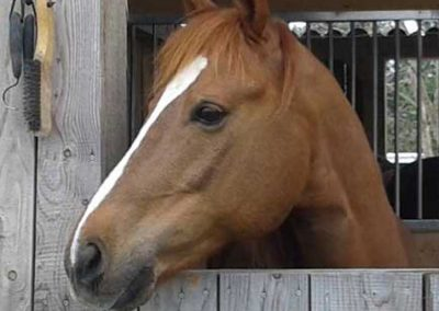 chestnut horse head over a wood barn door