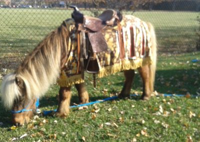 mini horse wearing medieval costume