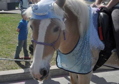 Golding Haflinger mare wearing blue dress, crown and socks like Elsa in the movie Frozen