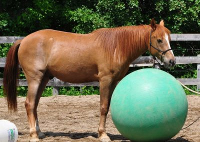 chestnut horse with very large green ball