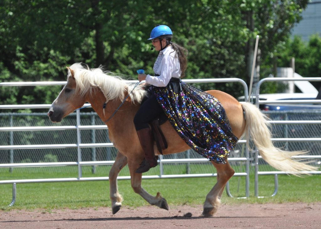 woman with sparkling skirt cantering on blond haflinger