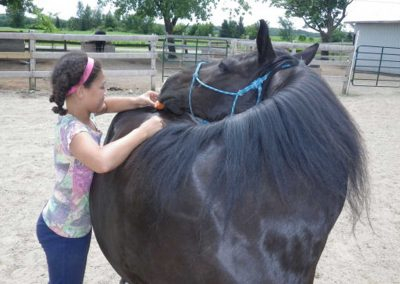 Girl giving black pony wearing a blue halter a carrot off the middle of his croup.