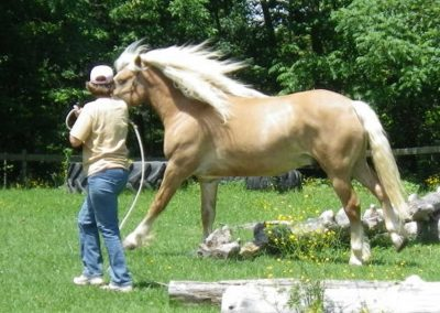 Canter on-line