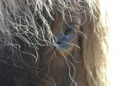 Close up of pony eye
