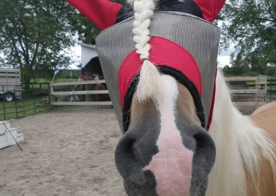 My new fly mask