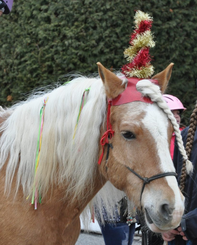 Blond horse wearing red and gold tinsel unicorn horn and rainbow ribbons in his mane
